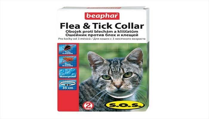 Ошейники от блох для кошек: отзывы, как действуют и как выбрать