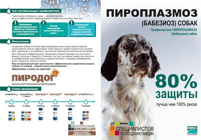 Прививка от клещей для собак: виды вакцин и основы вакцинации