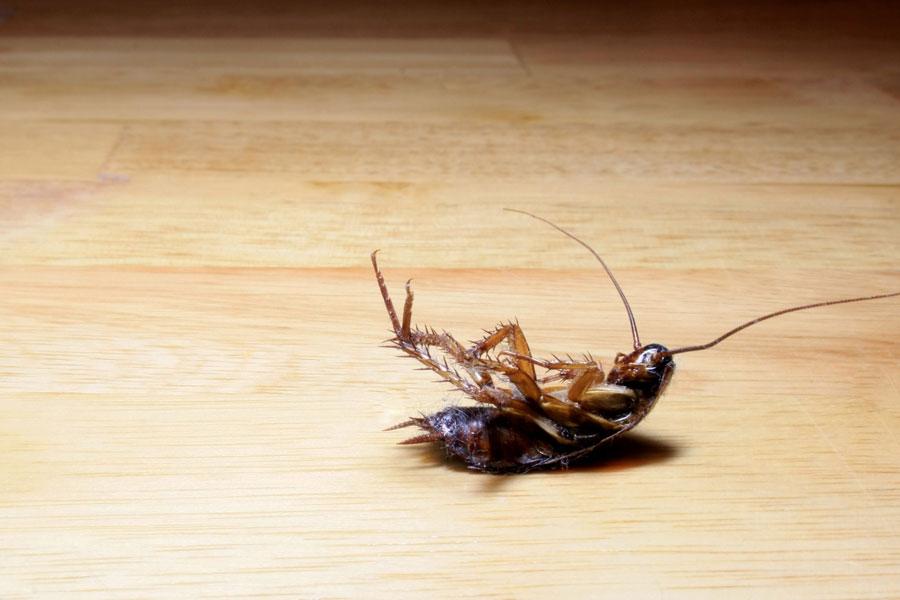 Как избавляясь от тараканов, не отравить себя и соседей