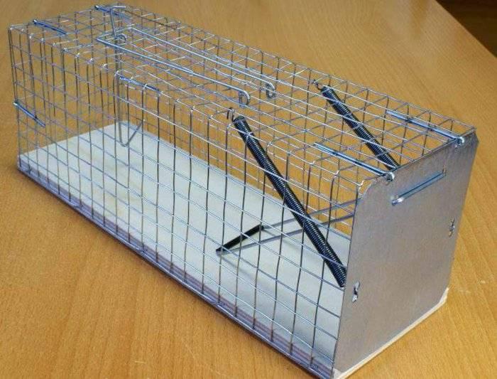 Ловушки для крыс: виды готовых приспособлений, как изготовить своими руками