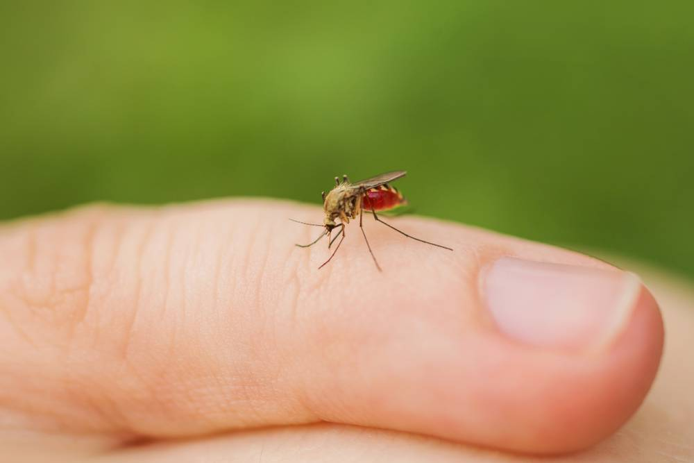 Есть ли в крыму комары? | керкинитида евпатория история с древних времен, до наших дней отдых и лечение в евпатории