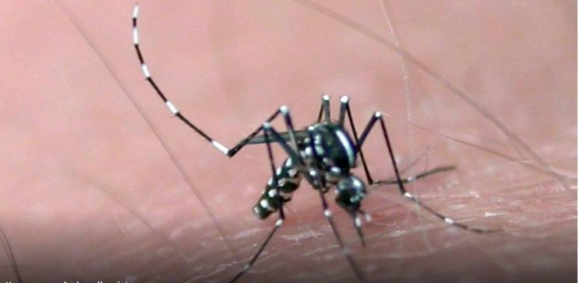 Малярийные комары и где они обитают