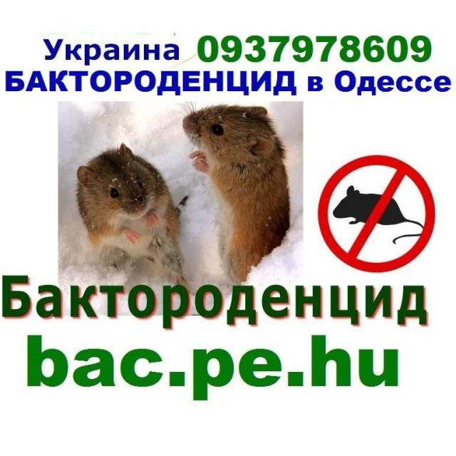 Как навсегда избавиться от крыс и мышей в доме народными средствами