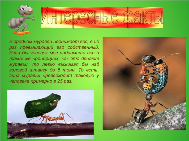 Сколько весит муравей?