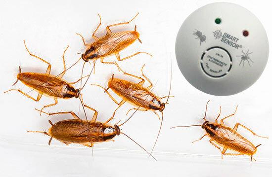 Как в частном доме избавиться от тараканов раз и навсегда