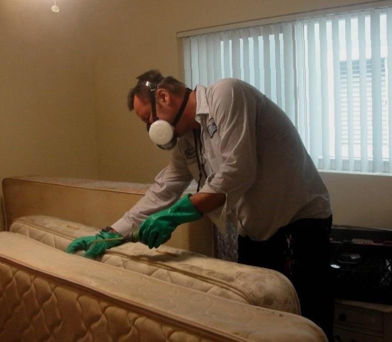 Избавиться от пылевых клещей в белье: советы по уборке | текстильпрофи - полезные материалы о домашнем текстиле
