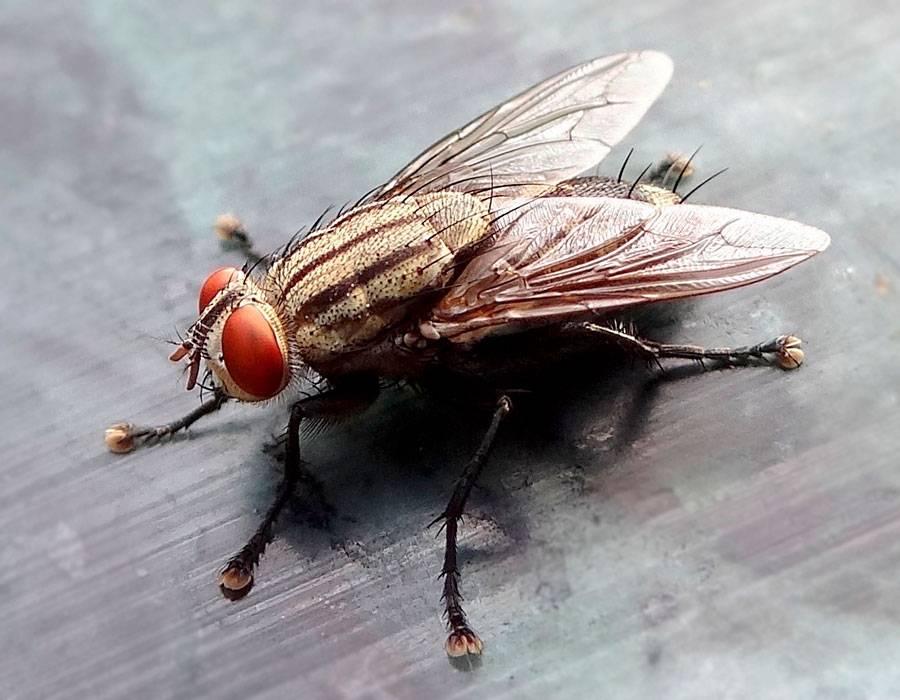 Какого запаха боятся мухи