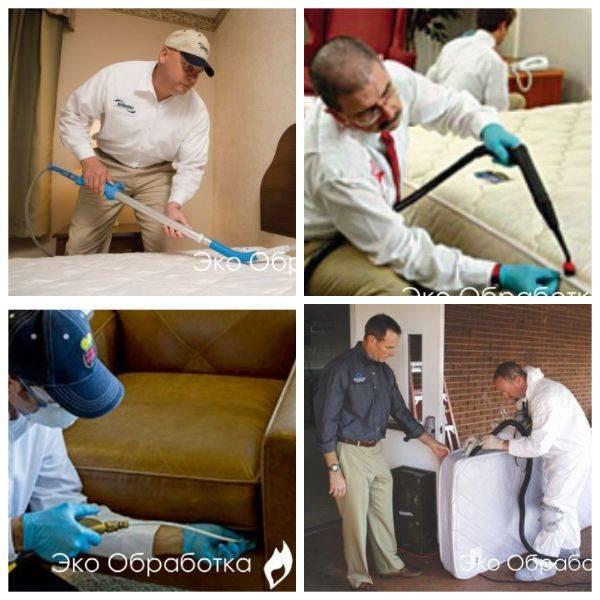 Обработка помещений от клопов: как происходит санобработка и сколько стоит / как избавится от насекомых в квартире