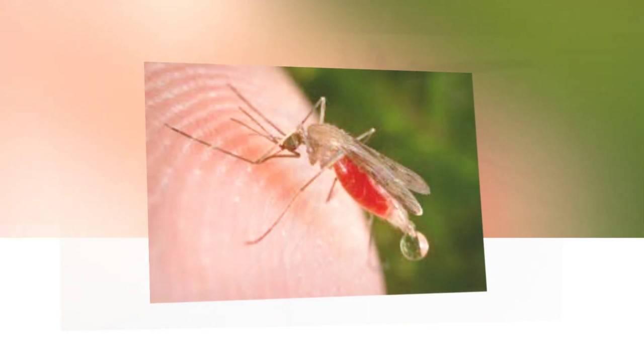 Аллергия на укусы комаров, опухоль и покраснение – что делать?