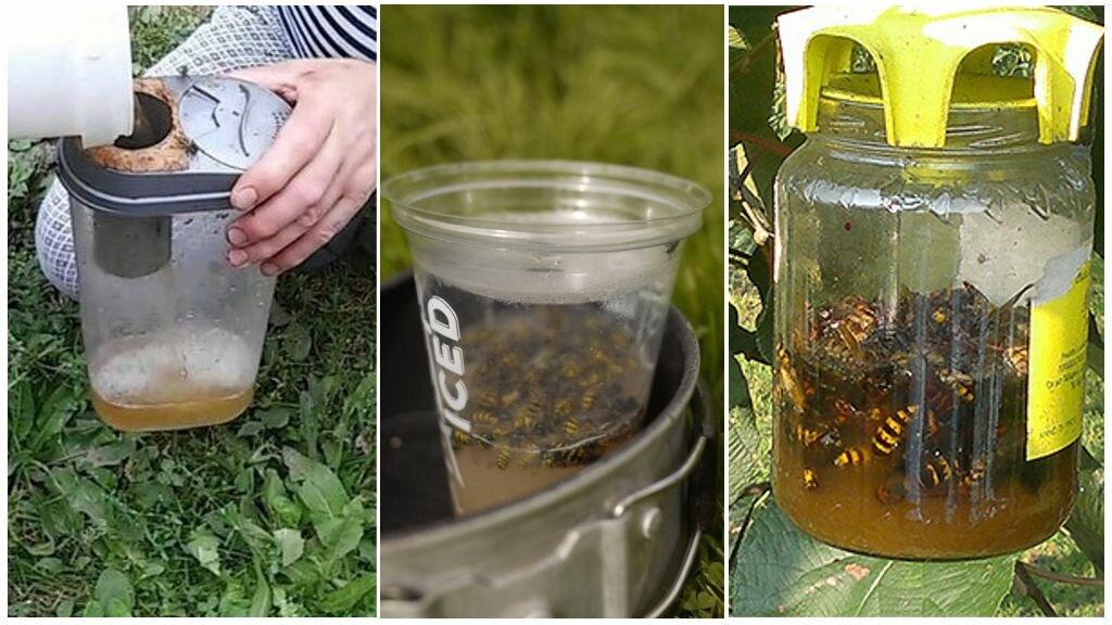 Мухоловка из бутылки. ловушка для мух своими руками: стоит ли результат затраченных усилий? особенности самодельных ловушек для мух