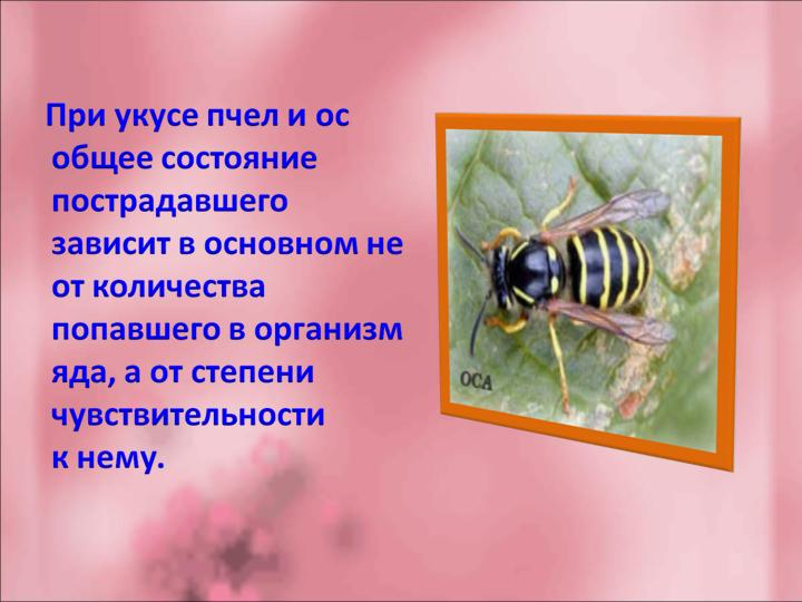 Осиный укус: в чем польза яда пчелы, его воздействие на организм