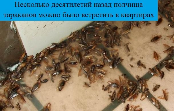 Куда делись тараканы из российских квартир: настоящая правда об исчезновении тараканов из больших городов