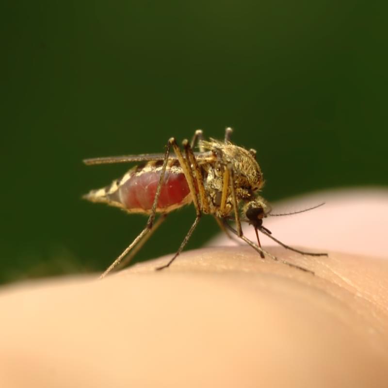 Укусы насекомых фото, кто укусил