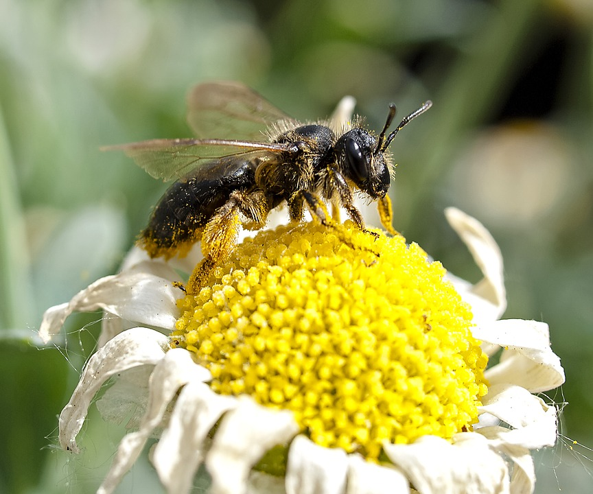 Как избавиться от пчел соседа, чего боятся пчелы и как от них избавиться мирно и кардинально