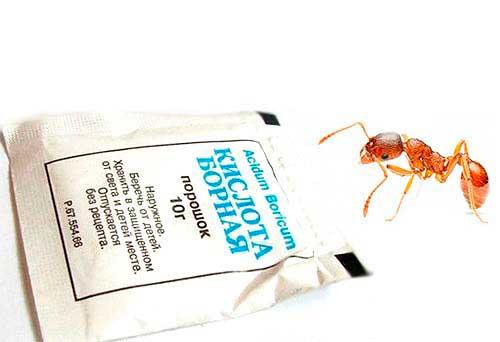 Борная кислота от муравьев в квартире: рецепты отравы, приманок, смесей и шариков с ее добавлением + фото, видео и отзывы