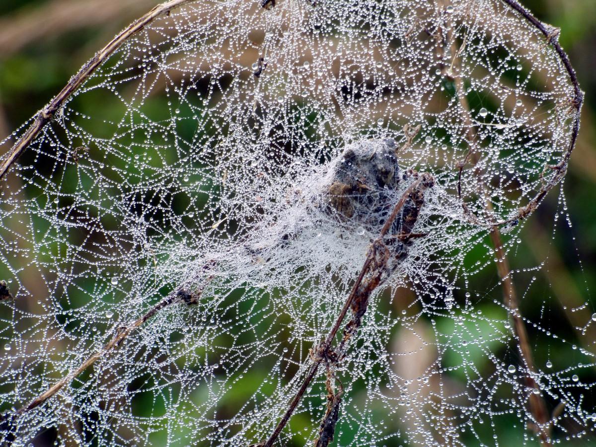 Способы избавления от пауков в доме