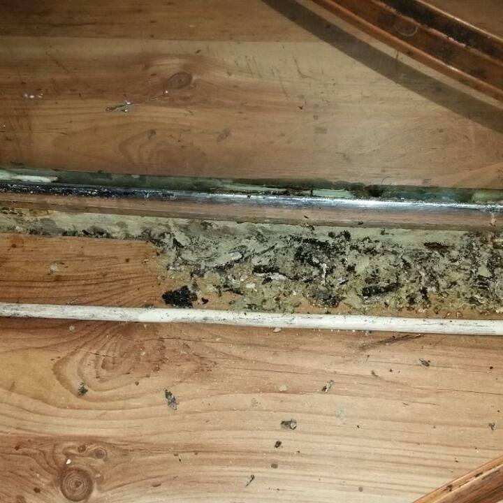 Большие муравьи в бане - как избавиться препаратами и народными средствами