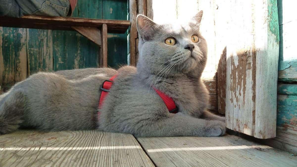 Почему кошки ловят и едят мух