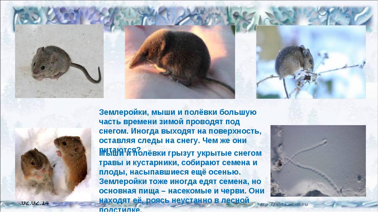 Когда просыпаются летучие мыши, где они зимуют? / как избавится от насекомых в квартире
