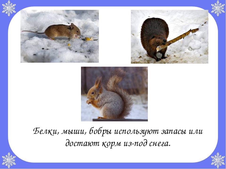 Какие животные впадают в зимнюю спячку?