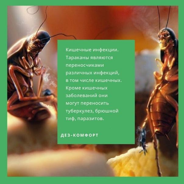 Опасность тараканов в квартире и вред здоровью человека