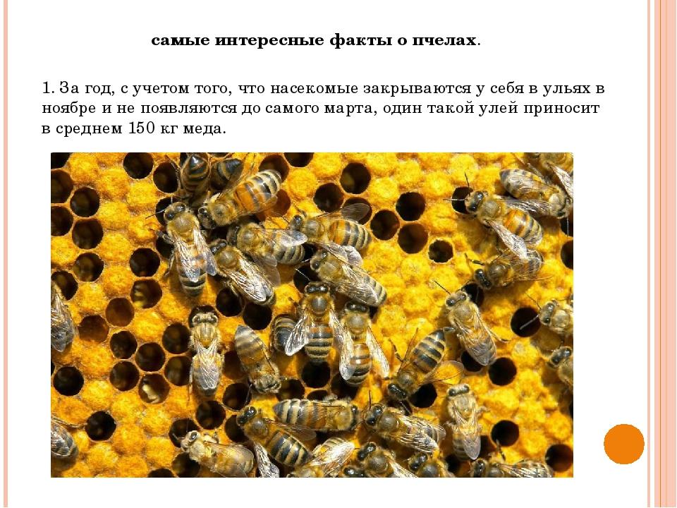 Золотые лучики — сайт творчества детям, родителям, педагогам виленско-литовской епархии   —  познаем  мир  божий: интересные факты о пчелах