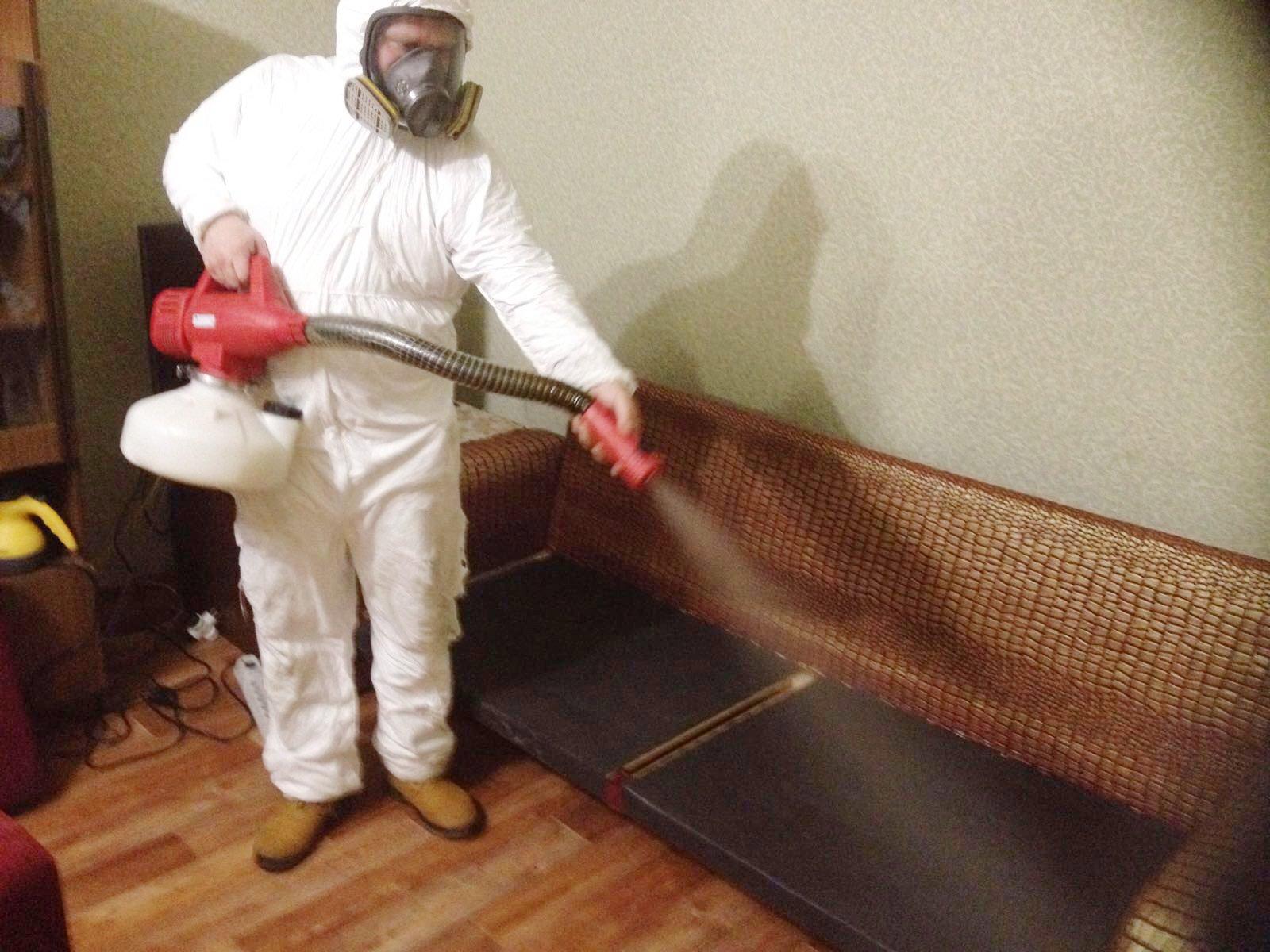 Избавляемся от пылевых клещей в доме: лучшие способы