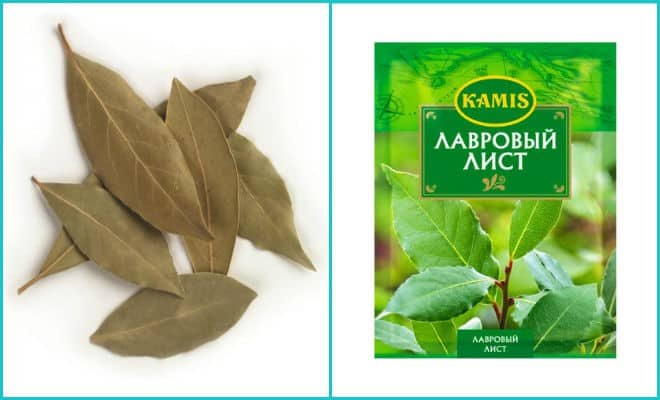 Лавровый лист от тараканов как использовать. что делать, если лавровый лист не помог. как обработать капусту лавровым листом от капустной мухи и ее гусениц народный рецепт