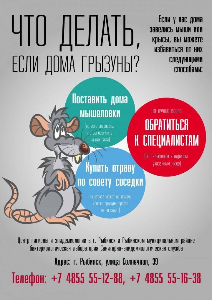 В машине завелись крысы - как избавиться от них