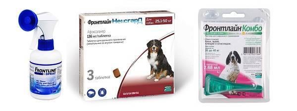 Капли от клещей для собак: какие лучше | отзывы, рейтинг
