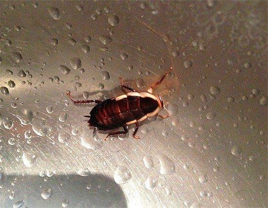 Сколько живут тараканы в различных условиях