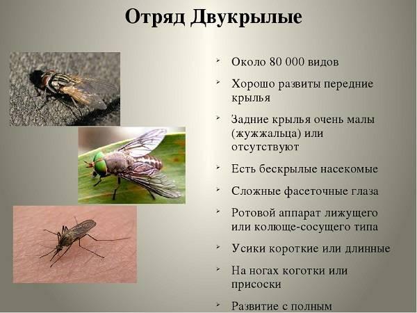 Самые опасные насекомые россии