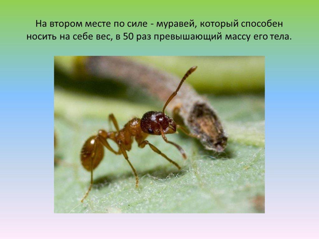 Сколько ног у муравья: основные признаки насекомого