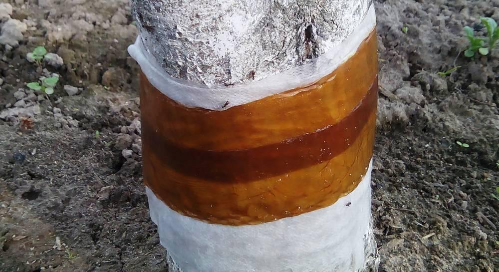 Как избавиться от муравьев на деревьях: способы и средства