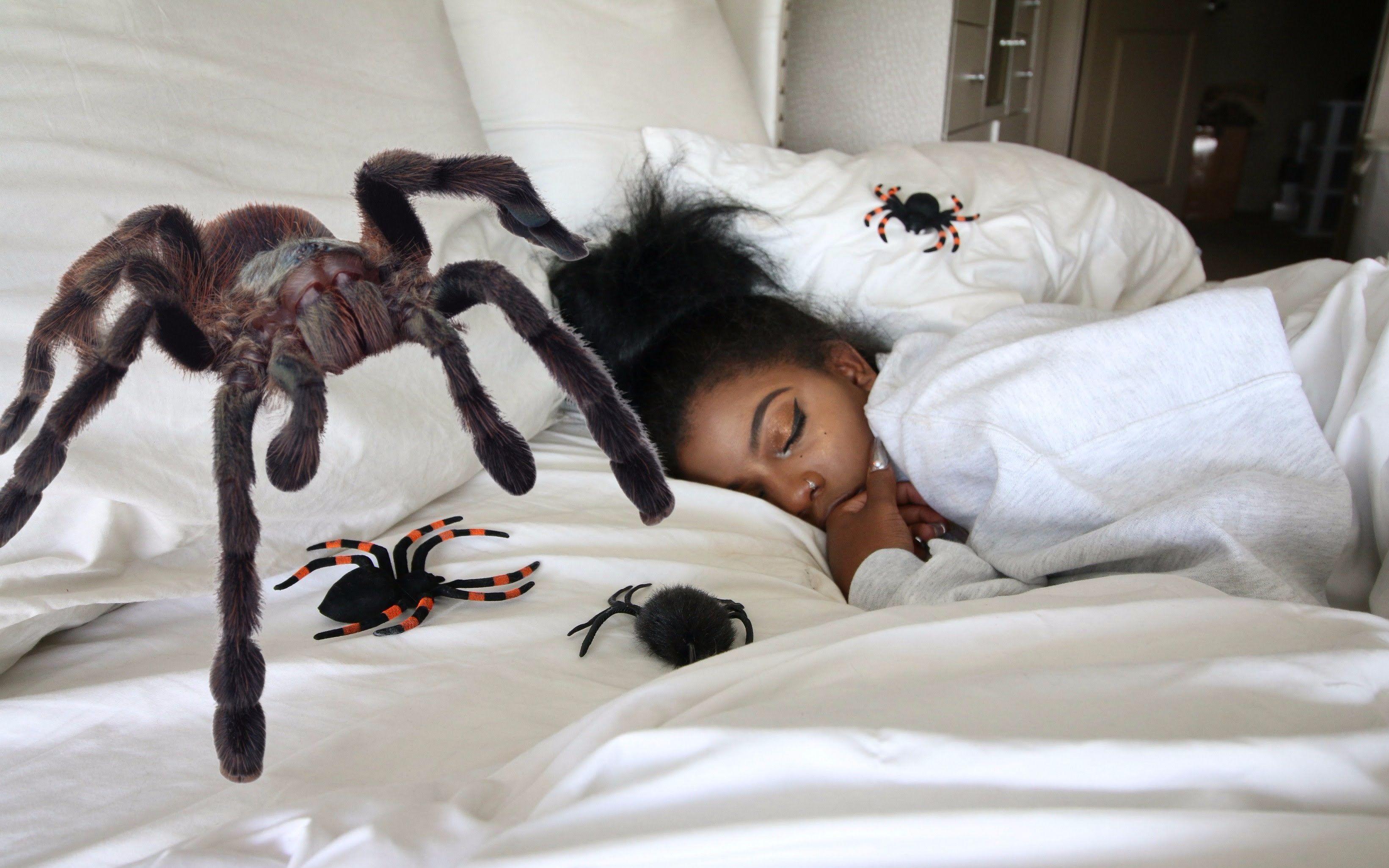 Самые опасные пауки в мире. самые страшные пауки – вся правда об арахнидах