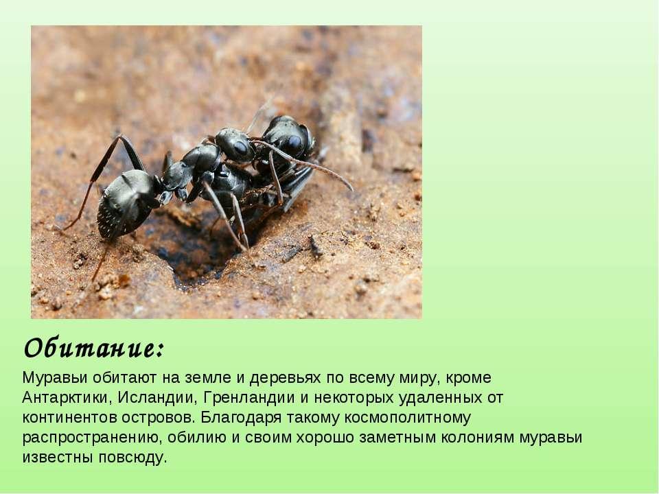 Доклад-сообщение про муравьев 1, 2, 3, 7 класс, кратко окружающий мир