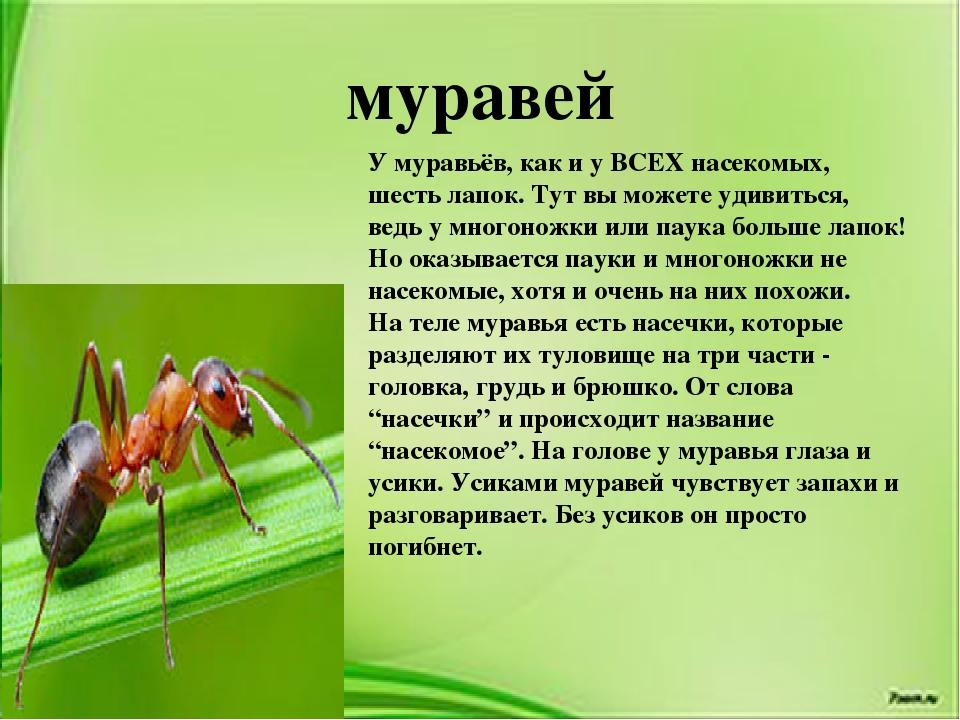 Муравьед животное. описание, особенности, виды, образ жизни и среда обитания муравьеда | живность.ру