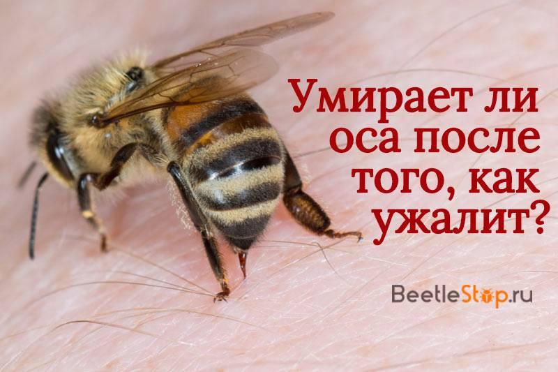 Укус пчел: как действует яд,первоя помощь, как помочь детям и аллергикам