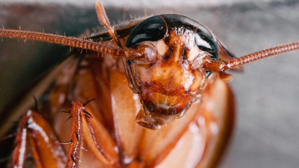 Чего боятся тараканы в квартире: топ 10 эффективных средств
