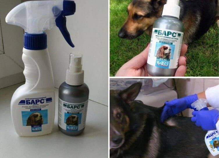Как избавить собаку от блох: от аптечки до народных средств