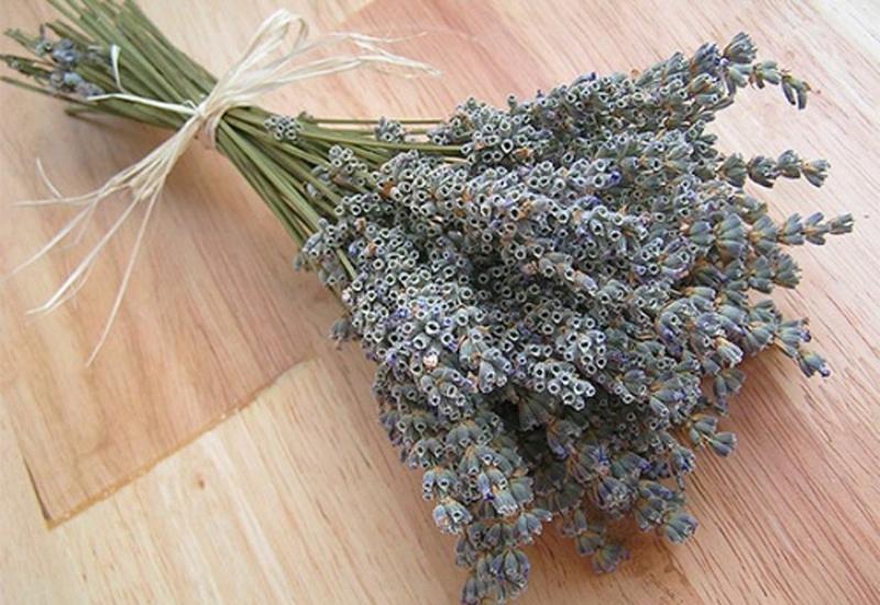 Какое растение отпугивает своим запахом моль? список растений