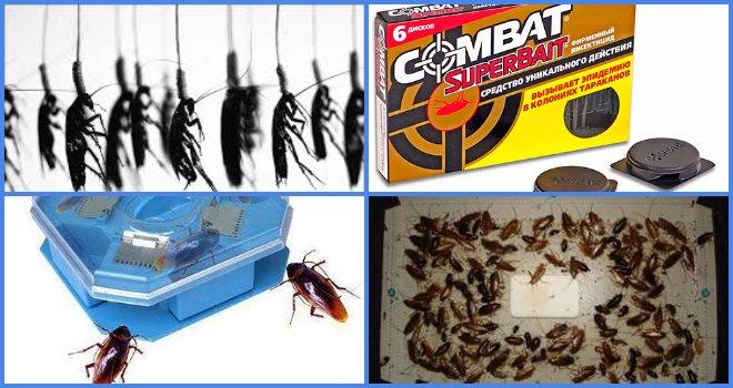 Ловушки для тараканов самые эффективные по отзывам