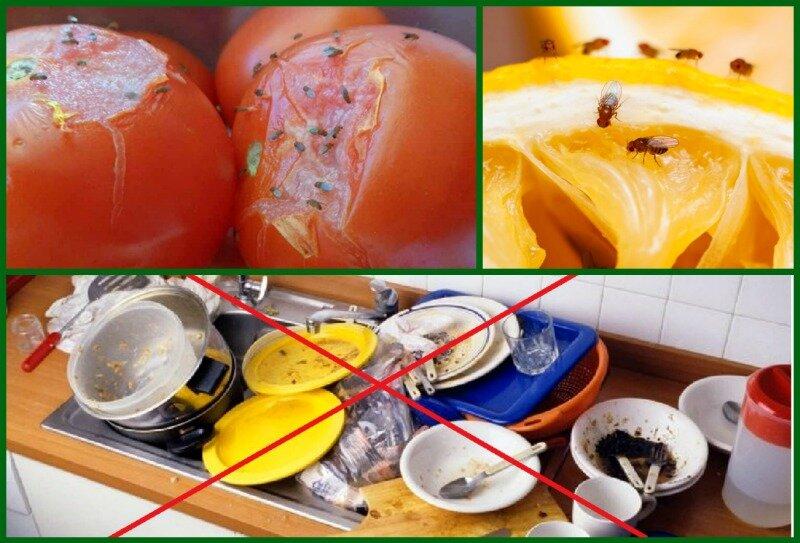 Как избавиться от мошек на кухне – пошаговая инструкция с ловушками и без