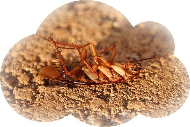 Толкование снов о тараканах: что говорят сонники