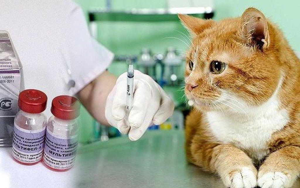 Вакцина от коронавируса: ответы на основные вопросы