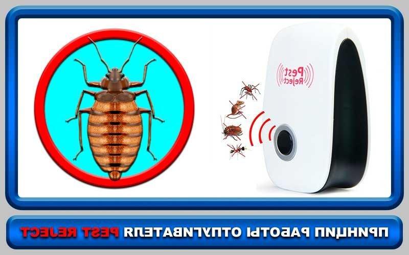 Средства электронные от тараканов: отзывы о приборах-уничтожителях и отпугивателях