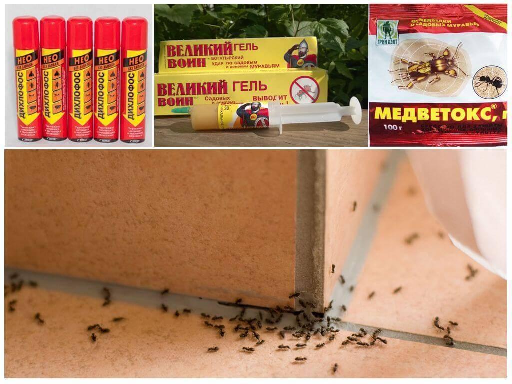 Как прогнать рыжих мелких муравьев из квартиры народными средствами