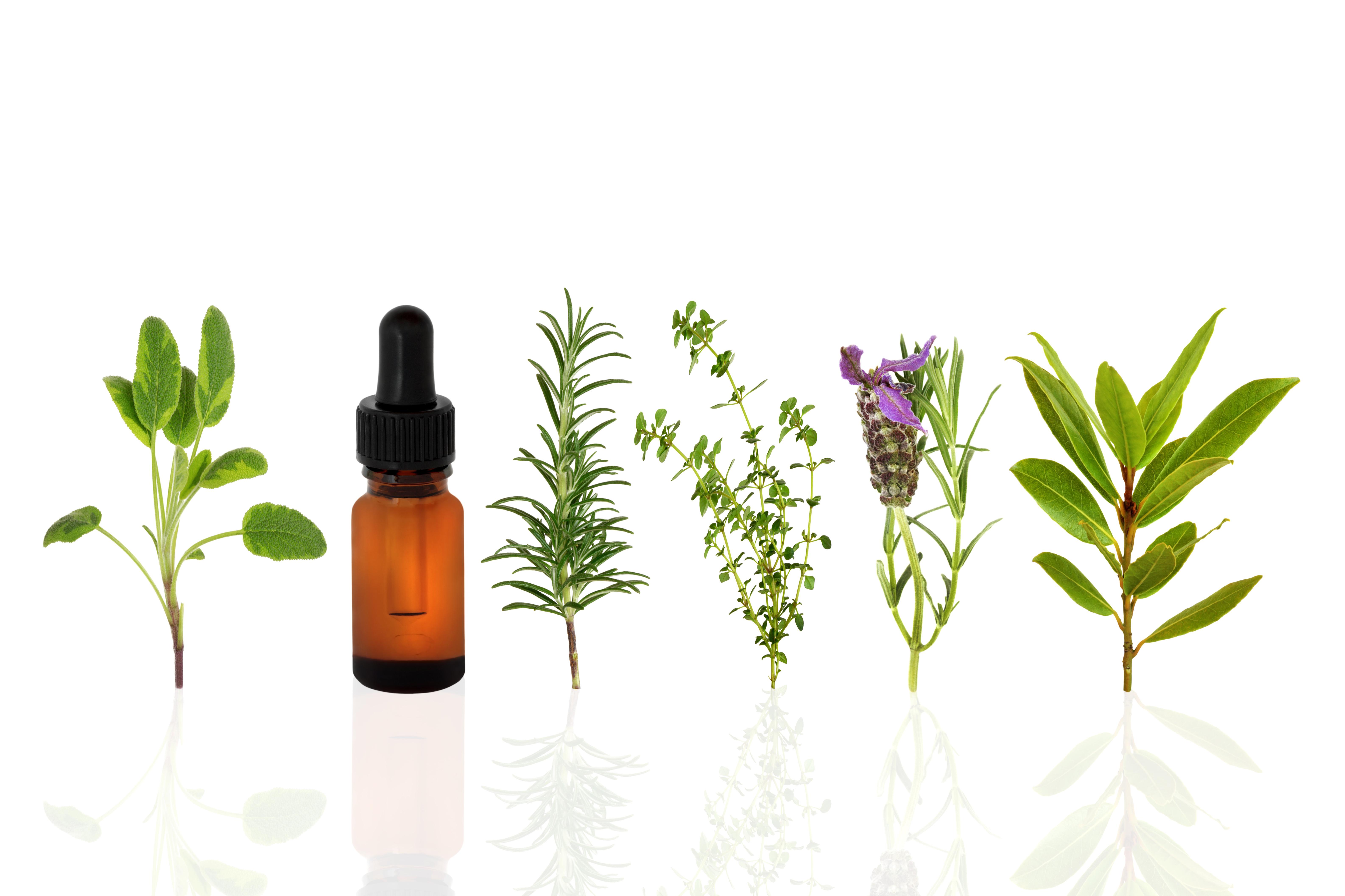 Борьба с плесенью: масло чайного дерева против химических веществ!