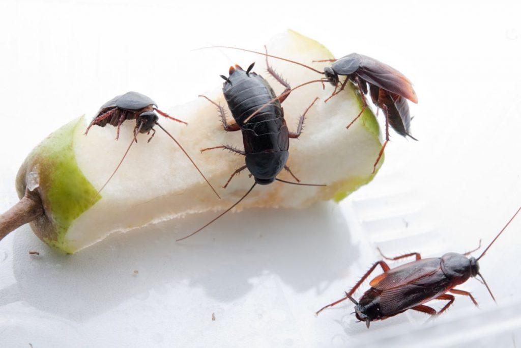 Как бороться с тараканами в квартире - эффективные методы