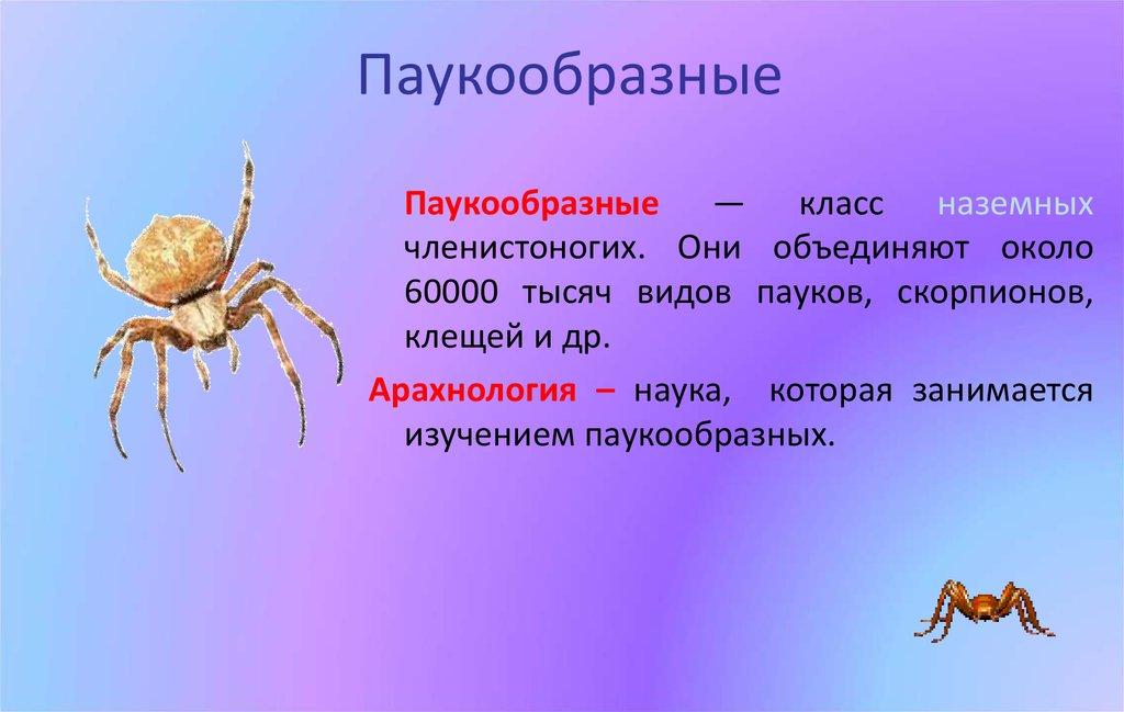 Паук – это насекомое или животное? класс к которому относятся пауки